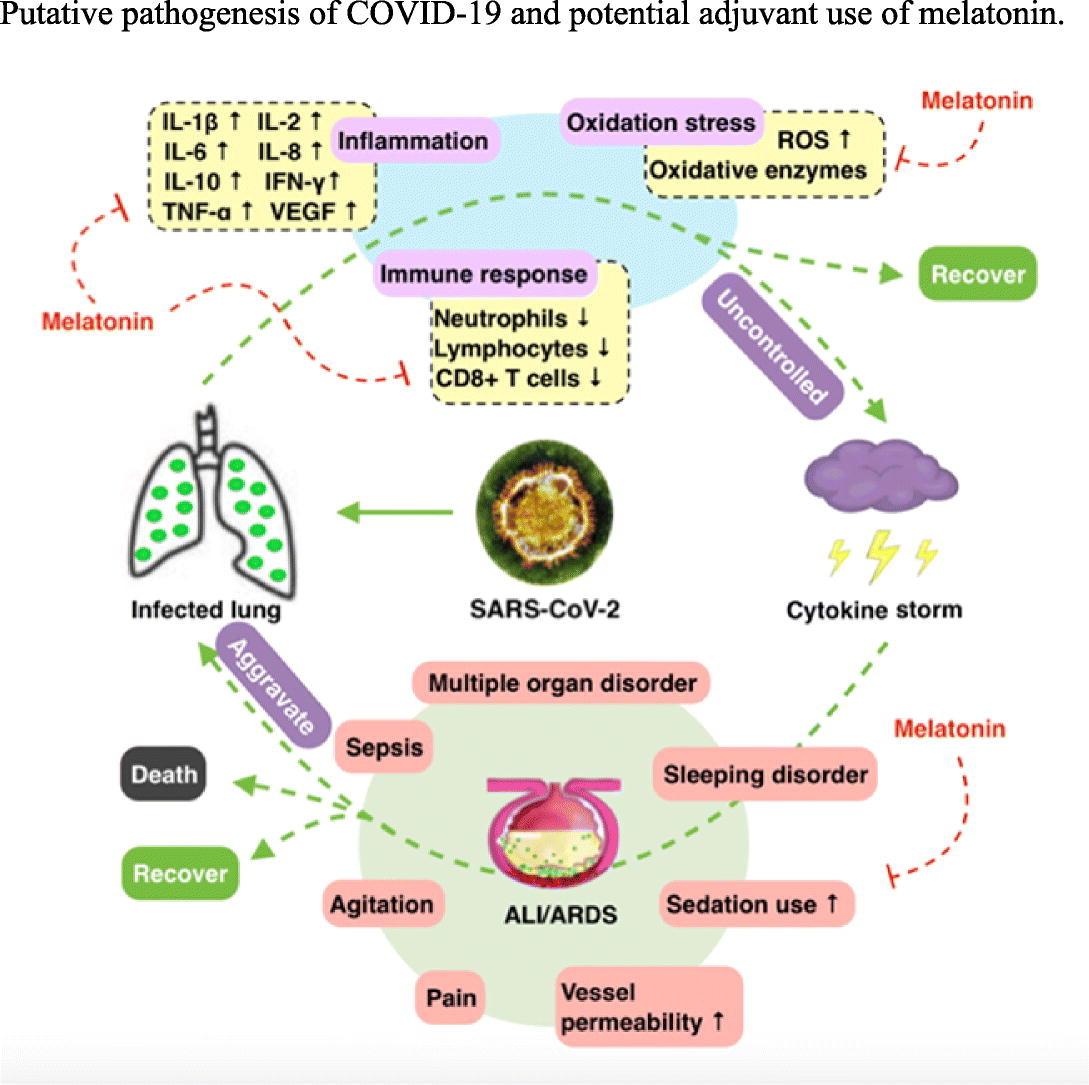 COVID-19: Melatonin as a potential adjuvant treatment